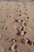 Footstepsgrootdreamstimefree_3473896
