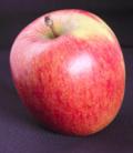 Ze neemt gewoon even een appel: geen tijd om echt te eten